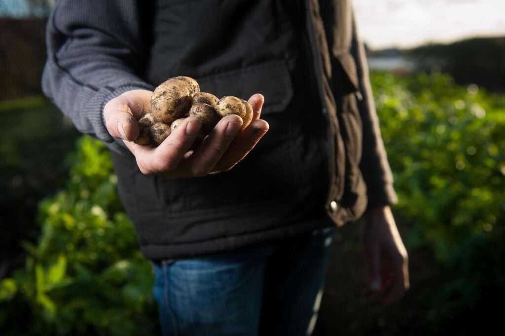 Druppelbevloeiing of druppelirrigatie zorgt voor een betere oogst en dus hogere opbrengst.